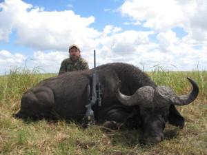 A old Swamp Buffalo!