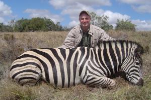 Burchell's Zebra - What a beautifull stallion!