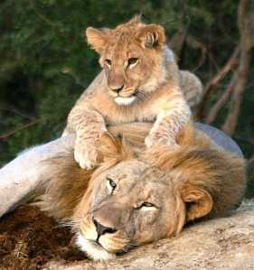 Lions from Lalibela.