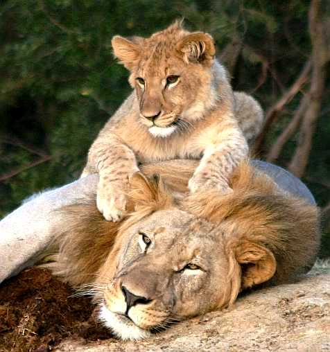 The Rewards Of Wildlife Conservation John X Safaris