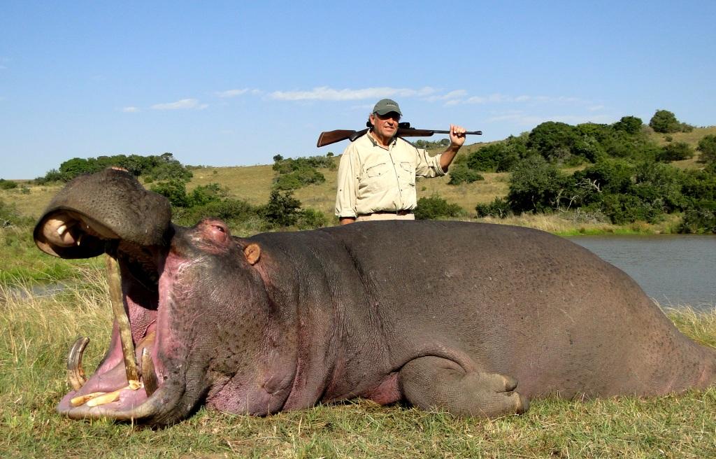 Hippo | John X Safaris