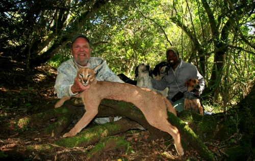Our Caracal/Lynx hunting with hounds continues to be one of our most popular. We hunted a number of cats this season, but it was not until the last safari of the year that we really hit the jackpot with a huge tom. David Combs proved to be the lucky hunter.