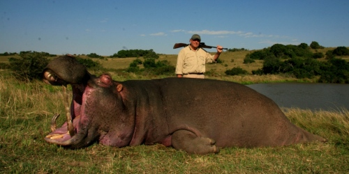 "The Hippo of the year was hunted by Lennart Packendorff – a whopping 26"" bull."