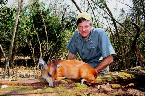 As luck would have it, things just fell into place - a great Red Duiker topped off a fairly relaxing day hunting the forest.