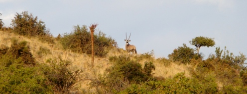 Northern Concession - The Great Karoo (5)